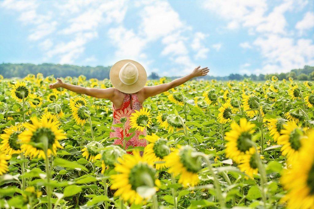sunflowers, field, woman